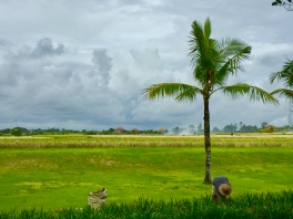 At the back of Soori Bali you'll find endless rice paddy fields
