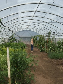 Endless greenhouses filled with fruit, veggies and herbs
